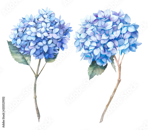 Watercolor blue hydrangea set Fototapet