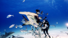 Portrait Of A Diver Giving Foo...