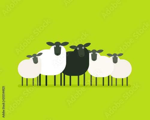 Fototapeta Black sheep in the herd
