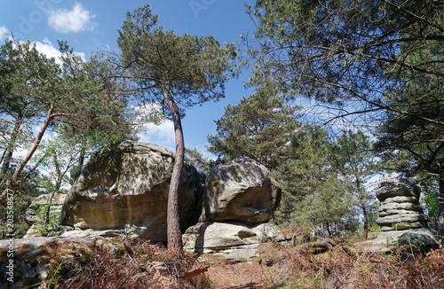 Foto op Aluminium Grijze traf. Nemours forest in the french Gâtinais regional nature park