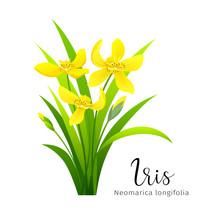 Vector Iris Yellow Flower, Iso...