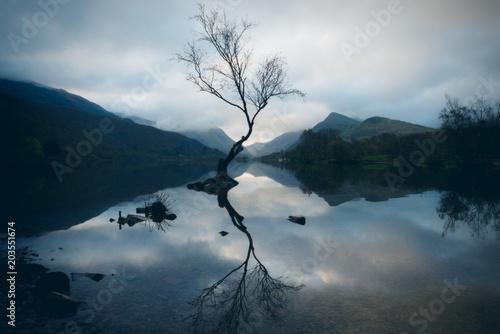 Fotomural Lone Tree At Llyn Padarn