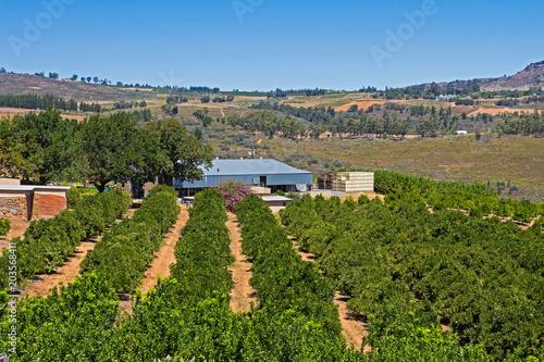 Foto op Plexiglas Zuid Afrika Fruit farm on mountain plateau