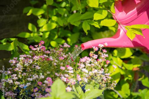 Fotografia  Blumen gießen im eigenen Garten, Gartenarbeit