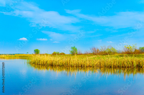 Poster Blauw Spring landscape in the countryside