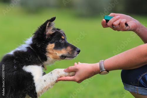 Fotografering Puppy border collie