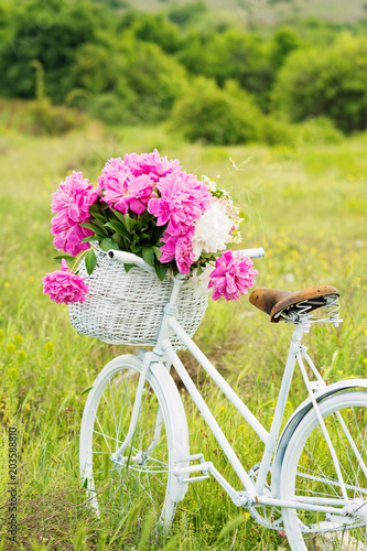 White retro bicycle with basket full of peonies in nature in spring. Natural lighting, no retouch.