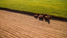 Sugar Cane Hasvest Plantation ...