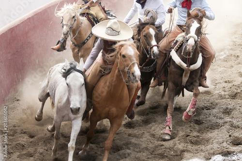 Fotografie, Obraz  Mexican charros performing a dangerous horse stun