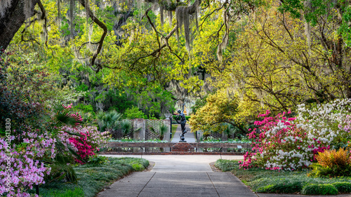 Poster de jardin Azalea Azalea Garden in Spring - South Carolina with Live Oaks