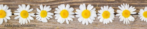 Banner of daisy chamomile flowers on wooden background. View with copy space