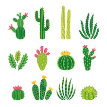 Vector Set Of Bright Cacti, Al...