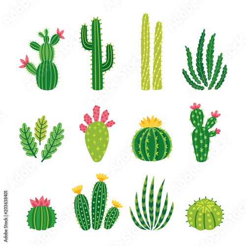 Fotografija Vector set of bright cacti, aloe and leaves