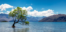 Panoramic Image Of The Lonely Tree In Lake In Wanaka, New Zealand