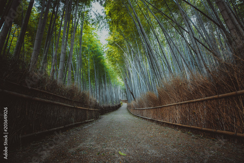 Foto op Aluminium Asia land Bamboo forest in Kyoto countryside
