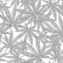 Simless Cannabis Background. Black Leaves Marijuana On White. Vector Illustration.