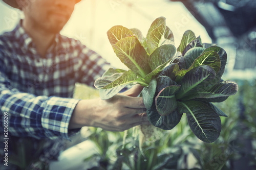Foto  farmer inspecting hydroponic farm and observing growth vegetable Meticulously af