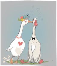 Vedding Couple Of Farm Birds