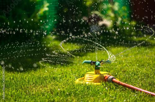 Obraz Garden watering of a spring green lawn. Sunny garden - fototapety do salonu