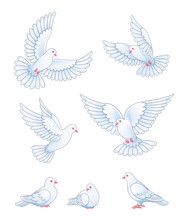 Set Of White Pigeons - Vector ...