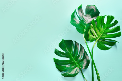 Fotografiet  Monstera leaves summer background