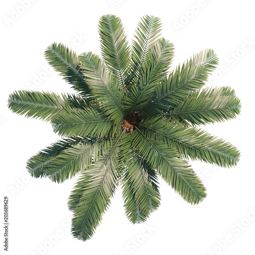 Stickers pour porte Palmier Phoenix canariensis top view path selection