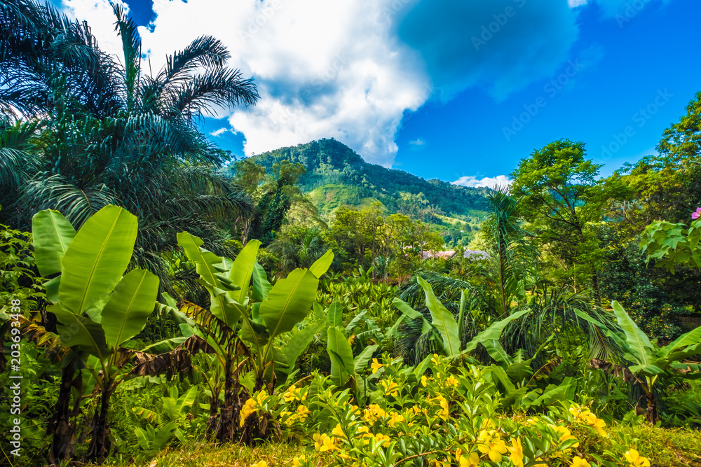 Fototapety, obrazy: Lush primeval forests, Ranomafana (hot water in Malagasy) National Park, Madagascar