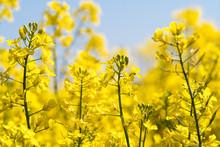 Farben Des Frühlings: Gelb Un...