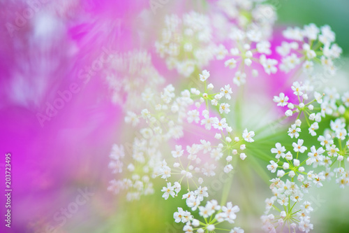 Foto op Canvas Bloemen Close-up of meadow flowers.