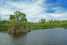 View Of The Cattail Lined Pond In Las Lagunas De Anza Wetlands Near Nogales, Arizona From The Dock Along The Shore With Blue Cloudy Sky Copy Space.