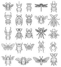 Set Of Insects Illustrations On White Background. Design Elements For Logo, Label, Emblem, Sign, Badge.