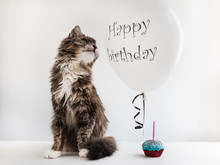 Cute, Sweet Kitty, White, Helium Balloon With Birthday Greetings And Cupcake With Candle. White, Isolated Background.Preparation For The Festive Event.Congratulations For Colleagues,friends,loved Ones