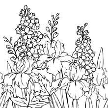 Vector Contour Delphinium Iris...