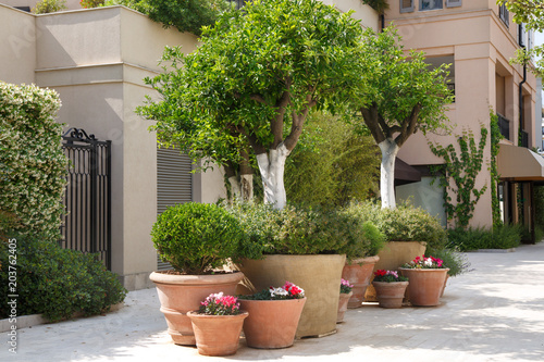 Huge decorative pots with plants on the street in Tivat, Montenegro Wallpaper Mural