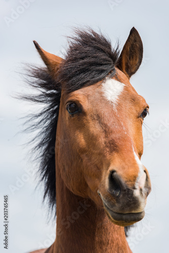 Brown horse head shoot portrait profile