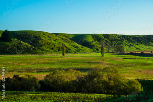 Spoed Foto op Canvas Nieuw Zeeland Stunning scene clear blue sky with green grassland in the morning. New Zealand agriculture in the rural area.