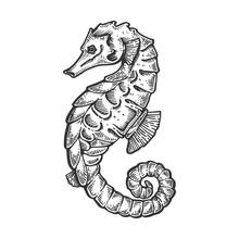 Sea Horse Animal Engraving Vec...