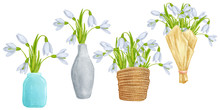 Hand Drawn Colorful Snowdrops In Vase Or Container. Beautiful Garden Plants In Sketch Style For Design Greeting Card, Package, Textile. Cartoon Illustration Isolated On White Background.