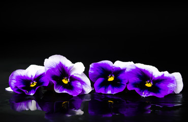Panel Szklany Violet flowers arrangement on dark background