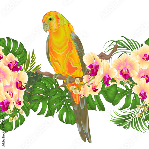 Deurstickers Papegaai Floral border seamless background and Sun Conure Parrot standing on a yellow orchid Phalaenopsis and palm, phiodendronon on a white background vector illustration editable hand draw