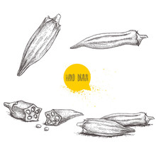 Hand Drawn Sketch Style Exotic Vegetables Okra Set. Vector Illustrations Collection Of Eco Healthy Food. Whole And Cut Composition Isolated On White Background.
