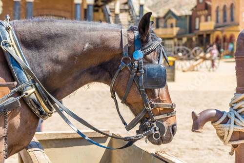 Photo Working horse with blinders