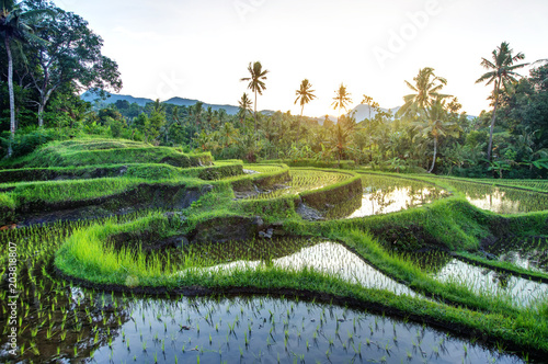 Montage in der Fensternische Bali Rice terraces on Bali during sunrise, Indonesia