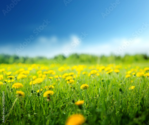 Papiers peints Pierre precieuse field of spring flowers and perfect sky