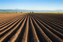 Potato Field In The Early Spri...