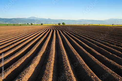 Foto  Potato field in the early spring after sowing - with furrows running towards the