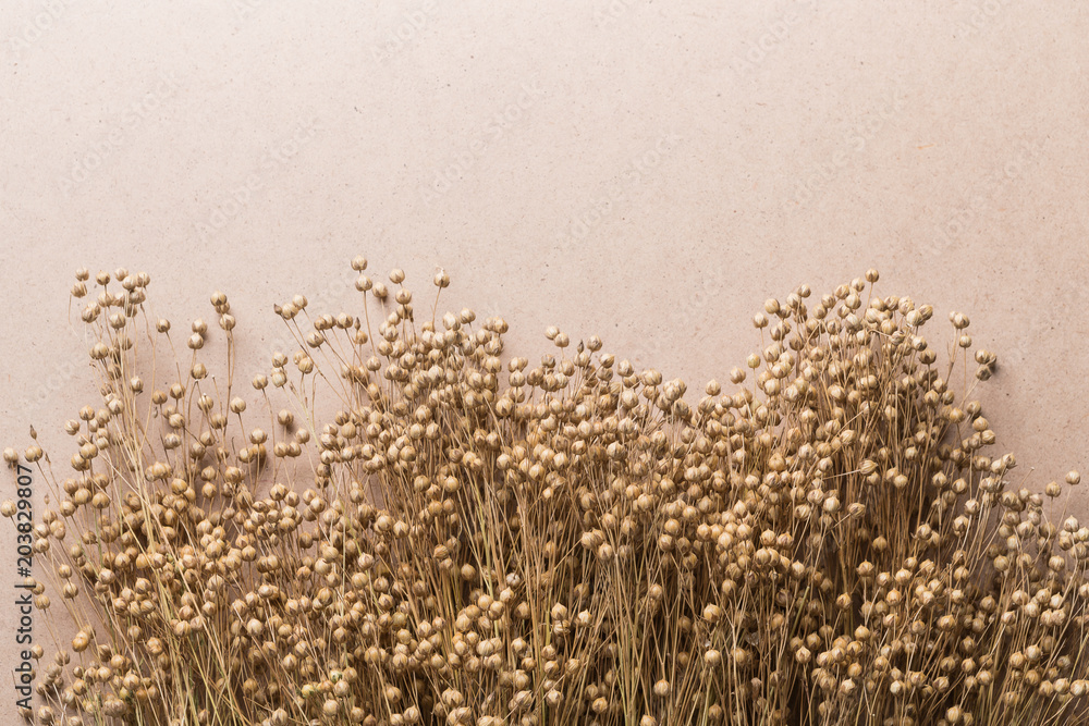 Fototapety, obrazy: plant dry flax on a beige background, a bunch of flax, a lot of dry plants