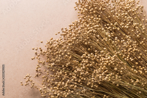 Obraz plant dry flax on a beige background, a bunch of flax, a lot of dry plants - fototapety do salonu