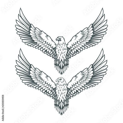 Fototapeta premium set of eagles. Bald eagle logo. Wild birds drawing. Head of an eagle. Vector graphics to design.