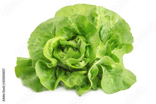 Frischer Kopfsalat - Lactuca sativa, isoliert